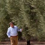Olive Varieties and terroir