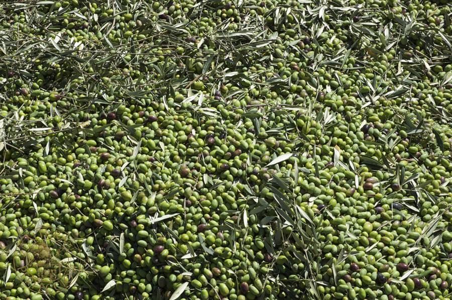 aceite de oliva prensado en frío