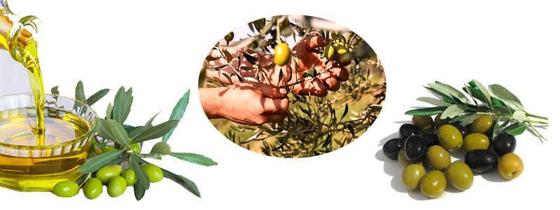 aceite oliva virgen extra valor nutricional