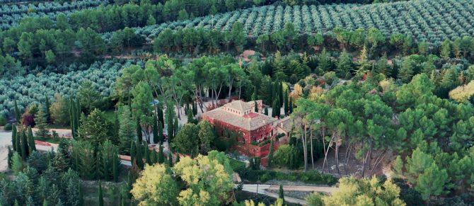 El cultivo del olivo: todas sus fases