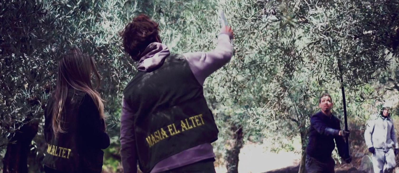 el cultivo del olivo masia el altet