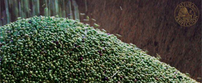 La importancia de los polifenoles en el aceite de oliva