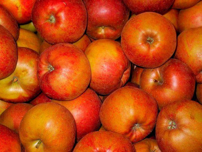 Receta deliciosa de manzana al horno llena de propiedades