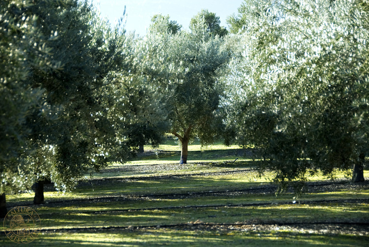 Olive-Grove Masia el Altet