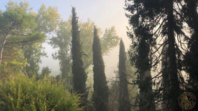 El repilo del olivo: Qué es y cómo tratarlo
