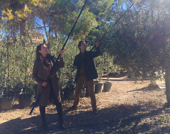 El arte de varear – Consejos para realizar el vareo del olivo adecuadamente
